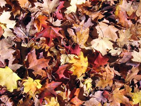 Autumn_arrives
