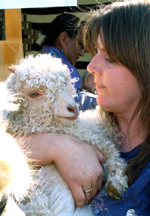 Goat_baby_1